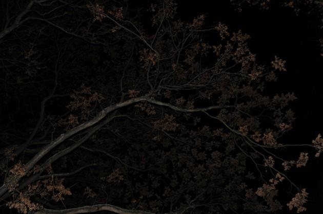 Laub Herbst braun
