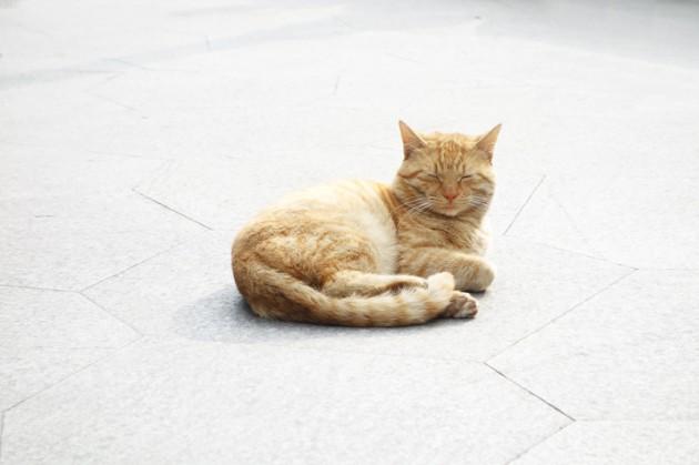 cat,  shanghai