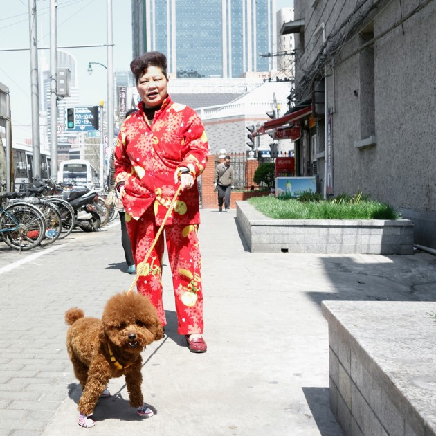 dog with shoes on, shanghai