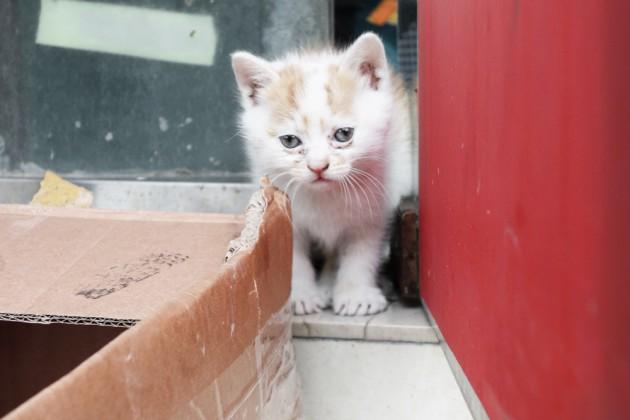 weltkatzentag, kitten in shanghai