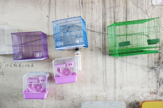 vogelkäfige, shanghai 2014