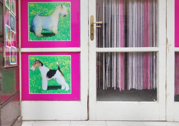 hundewiese und photoshop